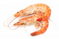 Study: PMS symptoms reduced by 44% with krill oil formulation